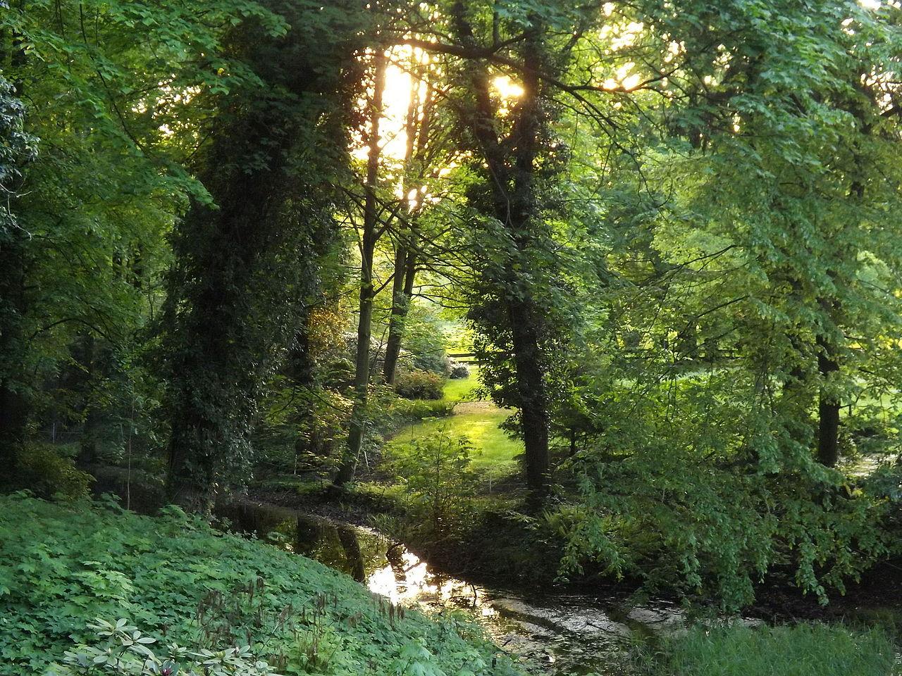 เคลนมาชโนว์-ป่าไม้สวยงาม