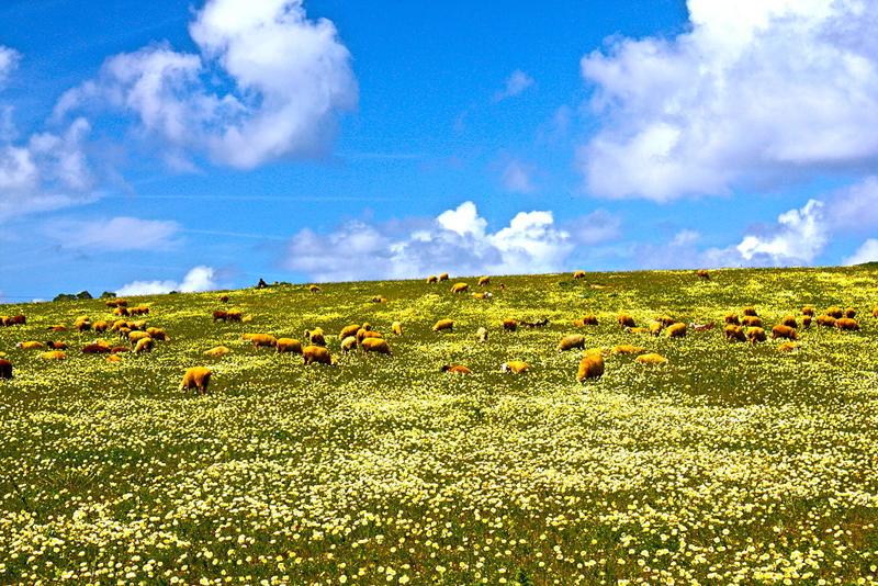 อังกราฟ-ทุ่งหญ้า