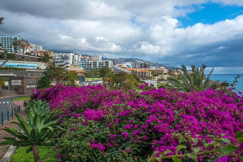 เกาะมาเดรา-ดอกไม้สวยๆ