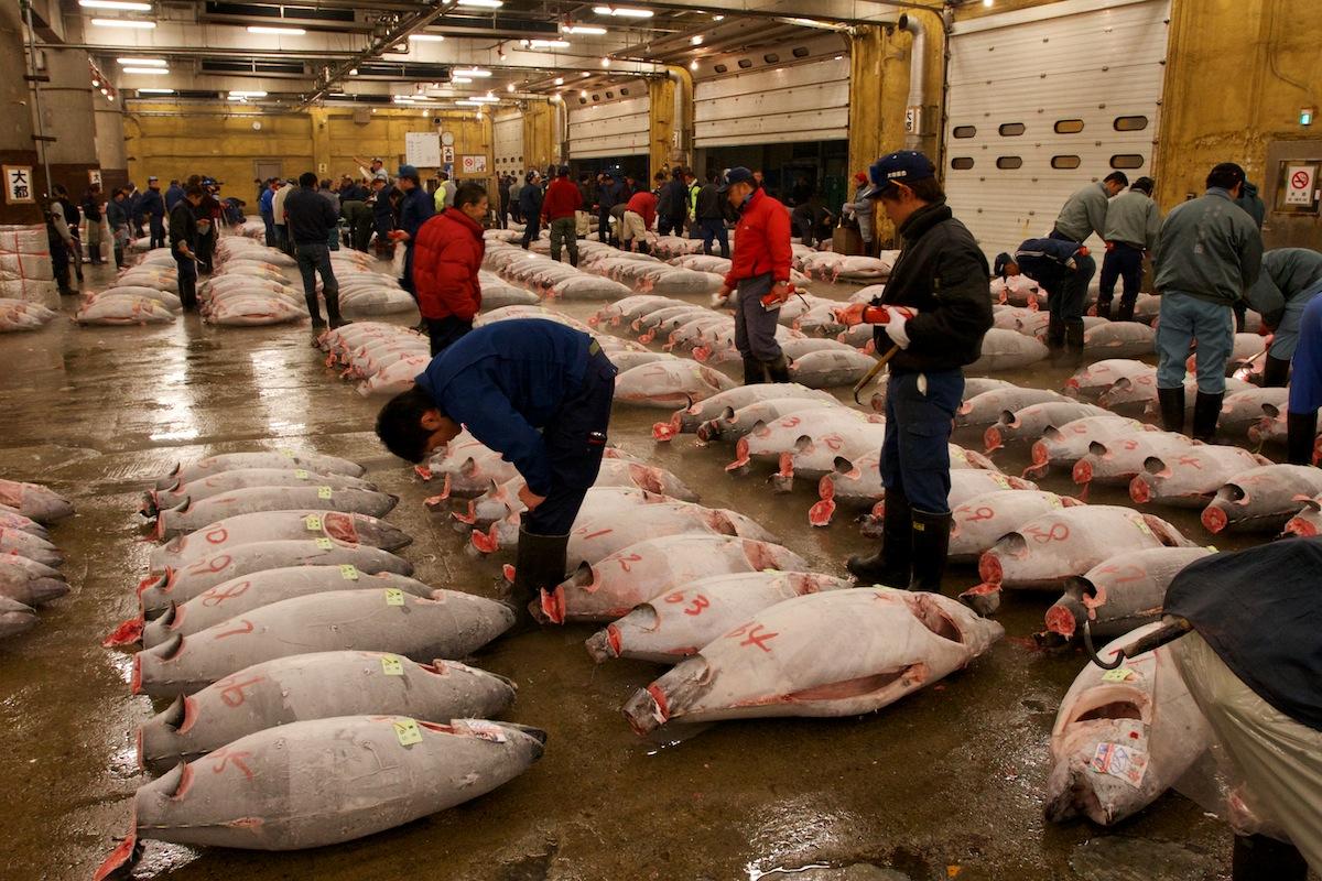10 ตลาดญี่ปุ่นที่น่าสนใจ-ตลาดปลาซึกิจิ