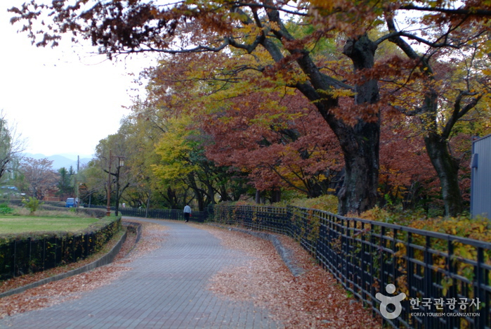 10 สถานที่ท่องเที่ยวเก่าเเก่ในเกาหลีที่ห้ามพลาด-สวนป่าเยริม