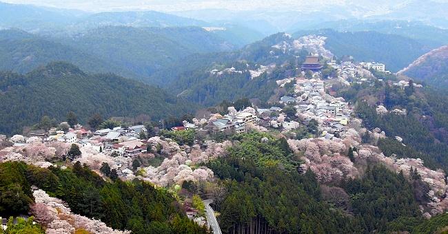 10 สถานที่ยอดนิยมสำหรับชมซากุระบาน -ภูเขาโยชิโนะ