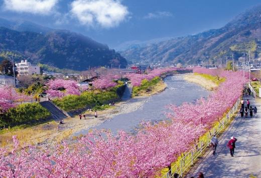 10 สถานที่ยอดนิยมสำหรับชมซากุระบาน -เมืองคาวาซุ