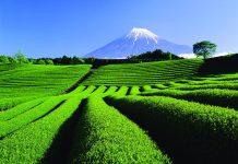 10 เมืองหลักที่น่าเที่ยวของญี่ปุ่น-ชิซูโอกะ