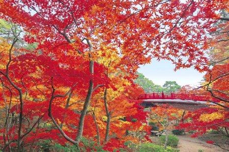 10 เเหล่งชิคสำหรับชมใบไม้เปลี่ยนสีในญี่ปุ่น -สวนยะฮิโกะ