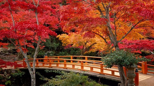10 เเหล่งชิคสำหรับชมใบไม้เปลี่ยนสีในญี่ปุ่น -สวนโมมิจิดานิ
