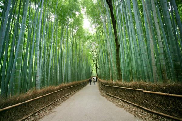 10 เเหล่งชิคสำหรับชมใบไม้เปลี่ยนสีในญี่ปุ่น -อาราชิยะมะ